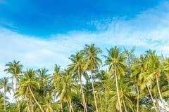 Tropical island, palm trees on sky background Stock Photo