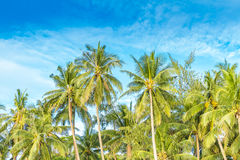 Tropical island, palm trees on sky background. Beautiful tropical island, palm trees on sky background Stock Image