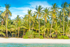 Tropical island, palm trees on sky background Stock Images