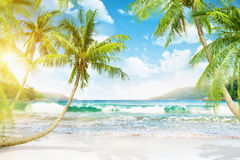Tropical island with palm trees. And sunlight Stock Image
