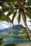 Tropical Island Paradise. With blue ocean water and lagoon Royalty Free Stock Images