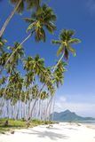 Tropical Island Paradise. Image of remote Malaysian tropical islands with deep blue skies, crystal clear waters and coconut trees Stock Image