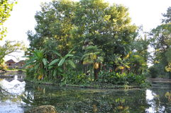 Tropical island. A tropical island in the pond Stock Images
