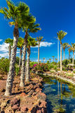 Tropical island resort garden with palm trees, flowers and river on Fuerteventura, Canary Island. Stock Images