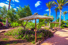 Tropical island resort garden with palm trees on Fuerteventura, Canary Islands, Spain Royalty Free Stock Image