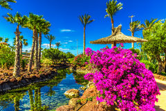Tropical island resort garden with palm trees on Fuerteventura, Canary Islands, Spain Stock Photo