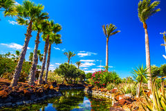 Tropical island resort garden with palm trees on Fuerteventura, Canary Islands, Spain, Europe Stock Image
