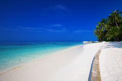 Tropical island with sandy beach and palm trees in Maldives Royalty Free Stock Image