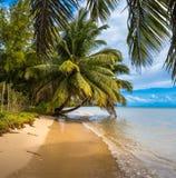 Tropical island - sea, sky and palm trees Stock Photos