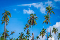 Tropical island. A shot of coconut trees taken at one of the tropical islands in Sabah Malaysia Royalty Free Stock Photos