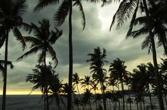 Tropical island, Sri Lanka Stock Photography