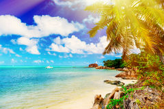 Tropical island on the sunny day Stock Image