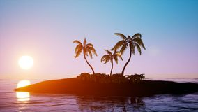 Tropical island sunrise with palm trees and clear sky. Tropical island sunrise with palm trees and clear blue sky stock footage