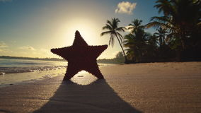 Tropical island sunrise. Sandy beach, palm trees and starfish, video stock video footage