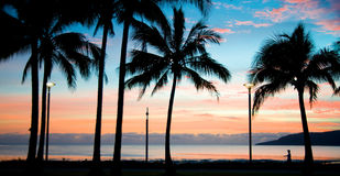 Tropical Island Sunset. Silhouettes of palm trees and a person walking on a tropical paradise island at sundown stock image