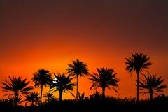 Tropical Island Sunset Sunrise Background Stock Image