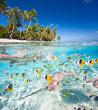 Tropical island under and above water stock photos