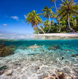 Tropical island under and above water Royalty Free Stock Photography