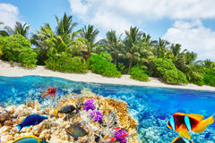 Tropical island and the underwater world in the Maldives. Stock Photography