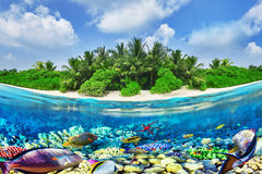 Tropical island and the underwater world in the Maldives. Royalty Free Stock Image