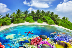 Tropical island and the underwater world in the Maldives. Stock Image