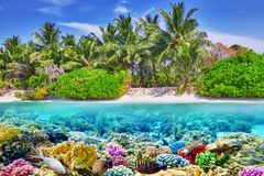 Tropical island and the underwater world Stock Images
