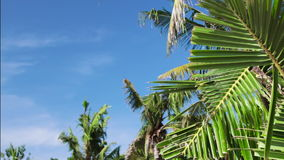 Tropical island vacation idyllic background. Exotic palm tree at sunny day with blue sky. Tranquil summer scene. Bali stock video