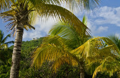 Tropical Island Vegetation Royalty Free Stock Photos