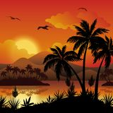 Tropical islands, palms, flowers and birds Stock Images