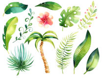 Tropical isolated illustration set. Watercolor boho tropic papm tree, leaves, green leaf, drawing, gungle exotic aloha Royalty Free Stock Image