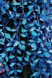 Tropical ivy glow in the dark background. High contrast.  stock images