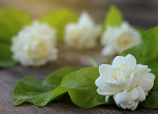 Tropical jasmine flower on wood.Jasmine flowers and leaves on br Royalty Free Stock Photo