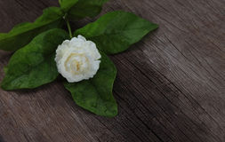 Tropical jasmine flower on wood.Jasmine flowers and leaves on br royalty free stock photography