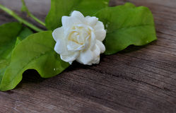 Tropical jasmine flower on wood.Jasmine flowers and leaves on ol Royalty Free Stock Photography