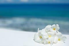 Tropical jasmine flowers (Plumeria) Stock Images