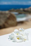 Tropical jasmine flowers (Plumeria) Royalty Free Stock Images