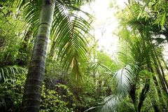 Tropical jungle Royalty Free Stock Image