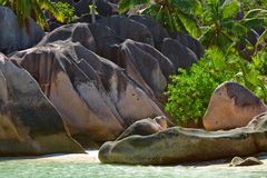 Tropical jungle Stock Image
