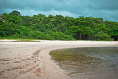 Tropical jungle. With river in Brazil Stock Images