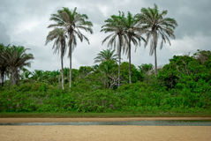 Tropical jungle. With river in Brazil Royalty Free Stock Images
