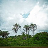 Tropical jungle. With river in Brazil Stock Image