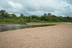 Tropical jungle. With river in Brazil Stock Photography