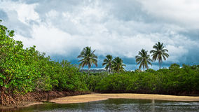 Tropical jungle. With river in Brazil Royalty Free Stock Photo
