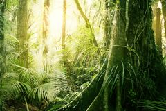 Tropical jungle. Morning sunlight in tropical jungle Stock Photography
