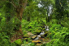 Tropical Jungle Royalty Free Stock Images