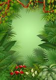 Tropical jungle background. Illustration of Tropical jungle background Stock Photos