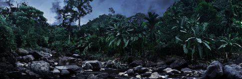Tropical jungle background at night. Tropical jungles background at night stock images