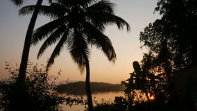 Tropical jungle background with palm tree silhouettes at sunrise stock video