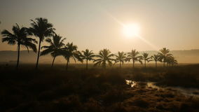 Tropical jungle background with palm tree silhouettes at sunrise stock video footage
