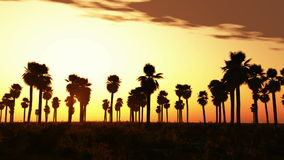 Tropical jungle background with palm tree silhouettes at sunset stock video footage